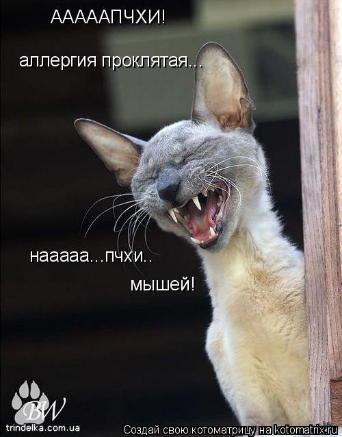 Котоматрица: АААААПЧХИ! аллергия проклятая... нааааа...пчхи.. мышей!