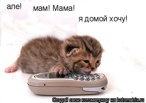 Котоматрица: але! мам! Мама! я домой хочу!
