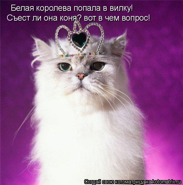 Котоматрица: Белая королева попала в вилку!  Съест ли она коня? вот в чем вопрос!