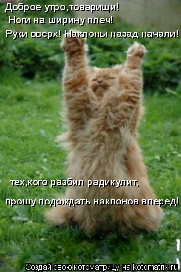 Котоматрица: Доброе утро,товарищи! Ноги на ширину плеч! Руки вверх! Наклоны назад начали! тех,кого разбил радикулит, прошу подождать наклонов вперед!