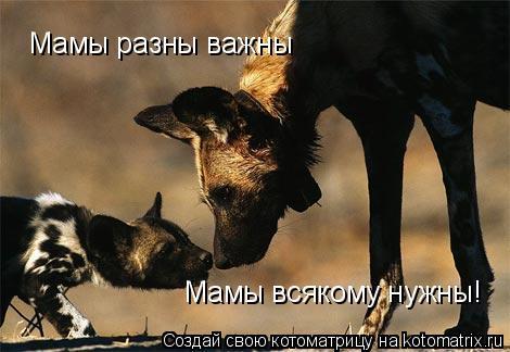Котоматрица: Мамы разны важны Мамы всякому нужны!
