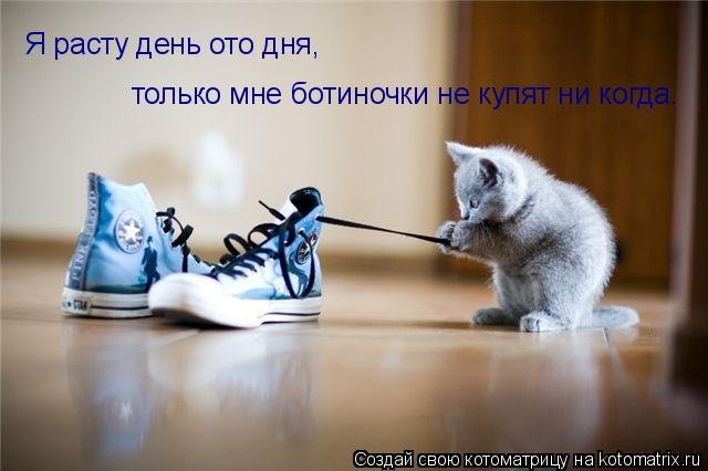 Котоматрица: Я расту день ото дня, только мне ботиночки не купят ни когда.