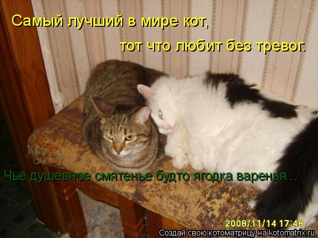 Котоматрица: Самый лучший в мире кот,  тот что любит без тревог.  Чьё душевное смятенье будто ягодка варенья...
