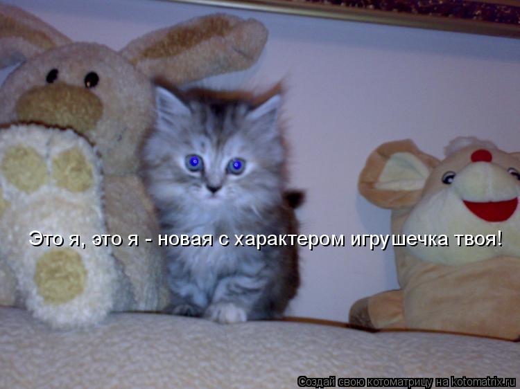 Котоматрица: Это я, это я - новая с характером игрушечка твоя!