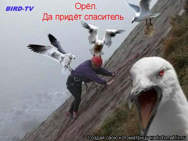 Котоматрица: Орёл. Да придёт спаситель
