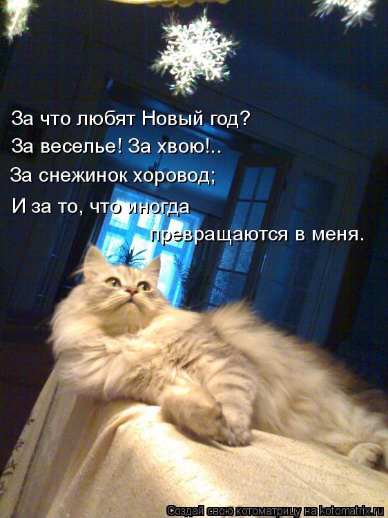 Котоматрица: За что любят Новый год? За веселье! За хвою!.. За снежинок хоровод; И за то, что иногда  превращаются в меня.