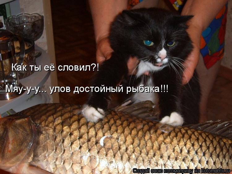 Котоматрица: Как ты её словил?! Мяу-у-у... улов достойный рыбака!!!
