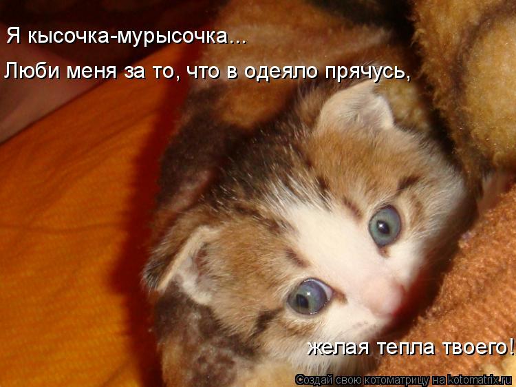 Котоматрица: Я кысочка-мурысочка... Люби меня за то, что в одеяло прячусь, желая тепла твоего!