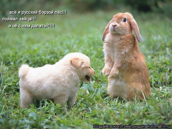 Котоматрица: всё я русский борзой пёс!!! поймал зайца!!! и чё с ним делать?!!!!