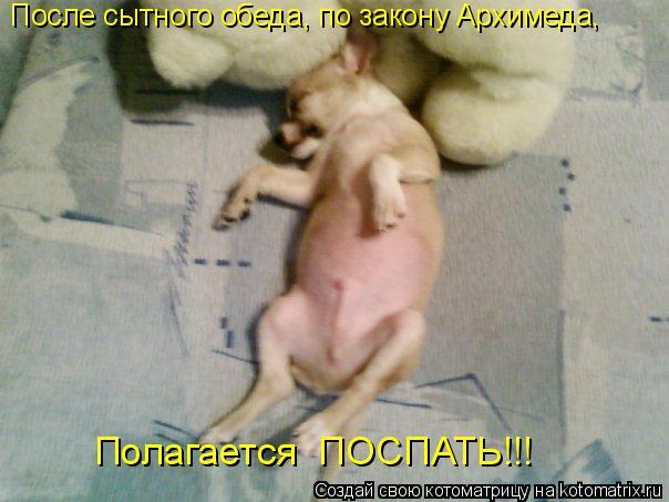 Котоматрица: После сытного обеда, по закону Архимеда, Полагается  ПОСПАТЬ!!!