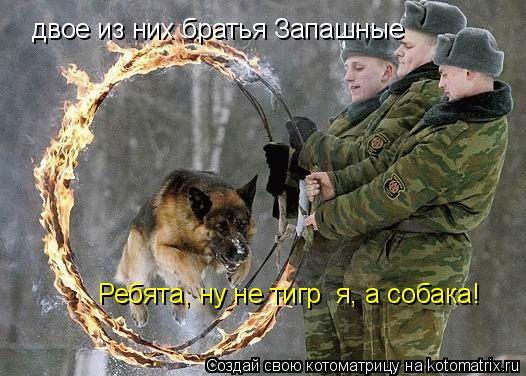 Котоматрица: двое из них братья Запашные Ребята, ну не тигр  я, а собака!