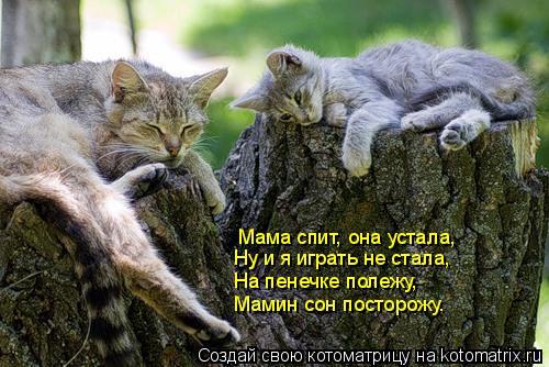 Котоматрица: Мама спит, она устала, Ну и я играть не стала, На пенечке полежу, Мамин сон посторожу.