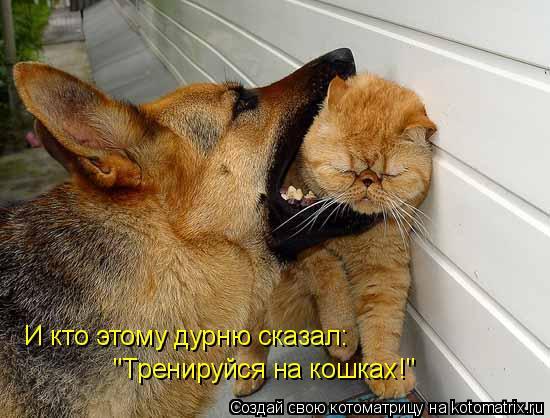 """Котоматрица: И кто этому дурню сказал: """"Тренируйся на кошках!"""""""