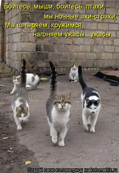 Котоматрица: мы ночные ахи-страхи, Бойтесь, мыши, бойтесь, птахи, Мы шныряем, кружимся, нагоняем ужасы...ужасы...