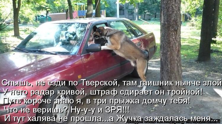 Котоматрица: Слышь, не езди по Тверской, там гаишник нынче злой! У него радар кривой, штраф сдирает он тройной! Путь короче знаю я, в три прыжка домчу тебя!