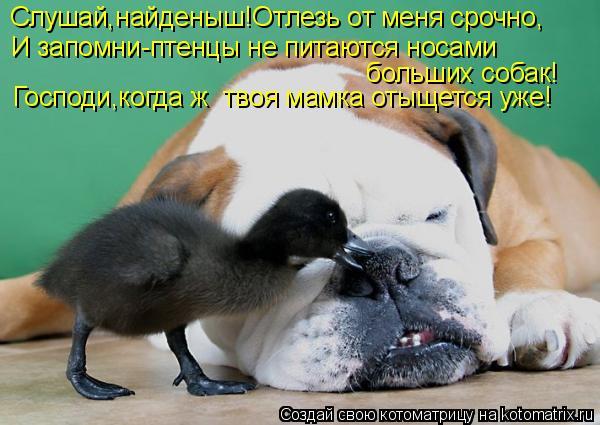 Котоматрица: Слушай,найденыш!Отлезь от меня срочно, И запомни-птенцы не питаются носами  больших собак! Господи,когда ж  твоя мамка отыщется уже!