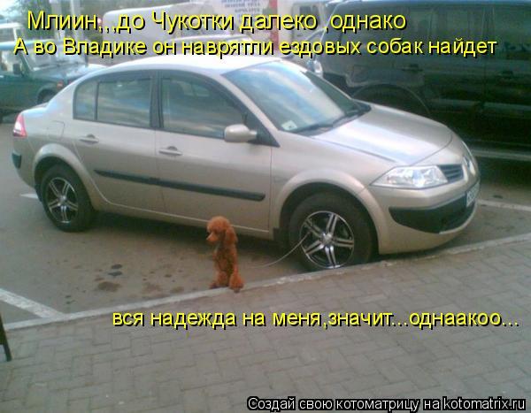 Котоматрица: Млиин,,,до Чукотки далеко ,однако А во Владике он наврятли ездовых собак найдет вся надежда на меня,значит...однаакоо...
