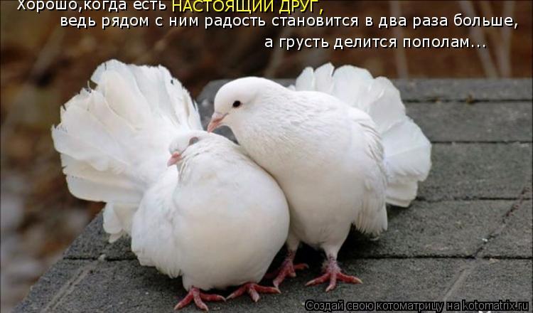 Котоматрица: ведь рядом с ним радость становится в два раза больше,  а грусть делится пополам... Хорошо,когда есть  НАСТОЯЩИЙ ДРУГ,