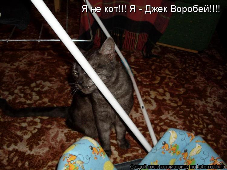 Котоматрица: Я не кот!!! Я - Джек Воробей!!!!