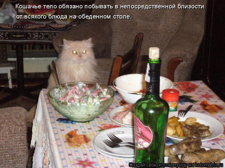 Котоматрица: Кошачье тело обязано побывать в непосредственной близости  от всякого блюда на обеденном столе.