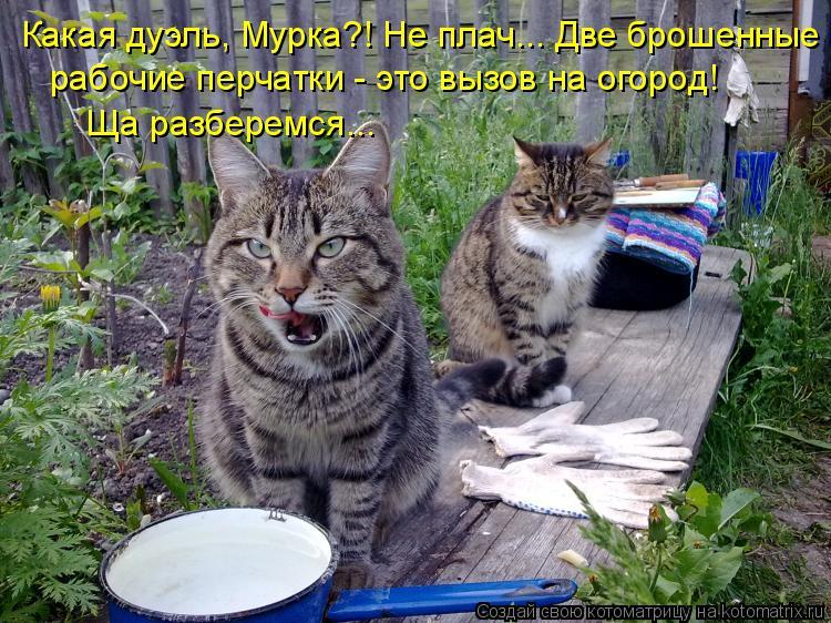 Котоматрица: Какая дуэль, Мурка?! Не плач... Две брошенные рабочие перчатки - это вызов на огород! Ща разберемся...