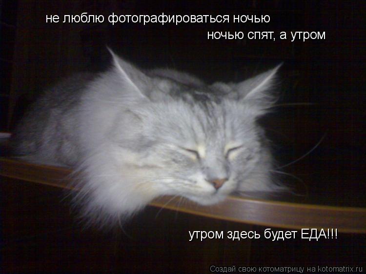 Котоматрица: не люблю фотографироваться ночью ночью спят, а утром утром здесь будет ЕДА!!! утром здесь будет ЕДА!!! утром здесь будет ЕДА!!!