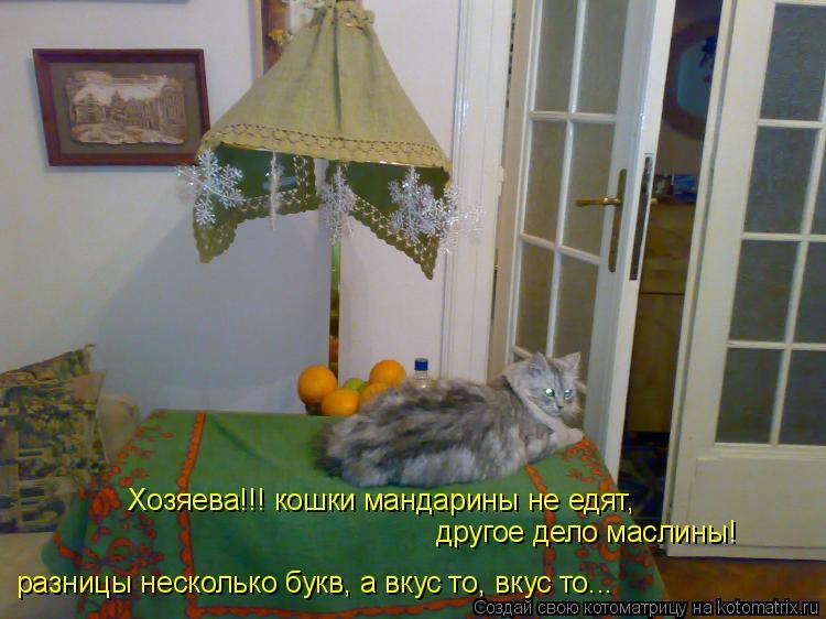 Котоматрица: Хозяева!!! кошки мандарины не едят, разницы несколько букв, а вкус то, вкус то... другое дело маслины!