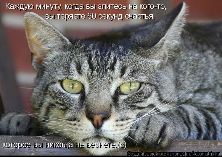 Котоматрица: Каждую минуту, когда вы злитесь на кого-то, вы теряете 60 секунд счастья, которое вы никогда не вернете.(с)