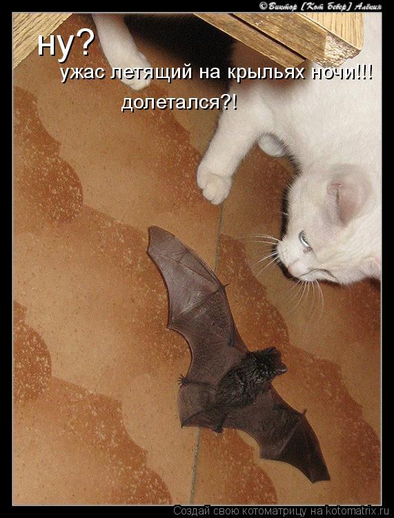Котоматрица: ну? ужас летящий на крыльях ночи!!! долетался?!