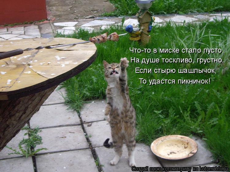 Котоматрица: Что-то в миске стало пусто, На душе тоскливо, грустно… Если стырю шашлычок, То удастся пикничок!