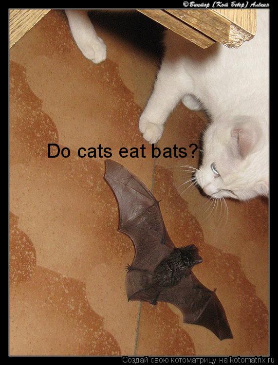 Котоматрица: Do cats eat bats?