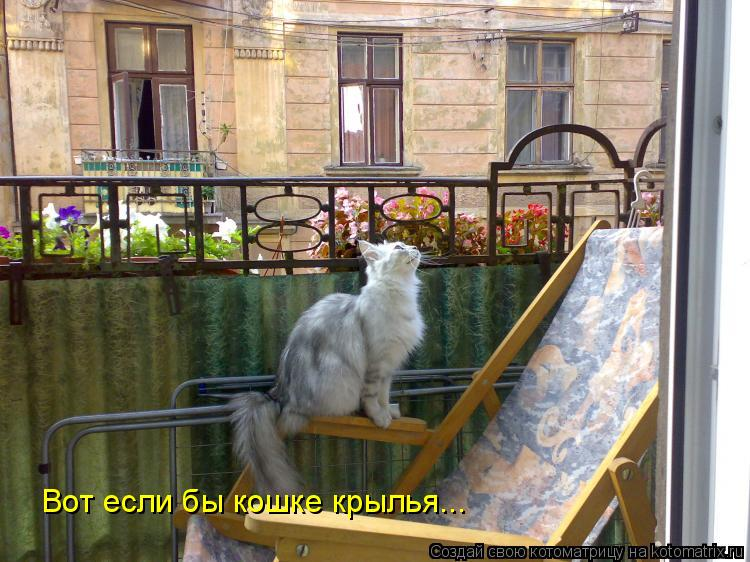 Котоматрица: Вот если бы кошке крылья...