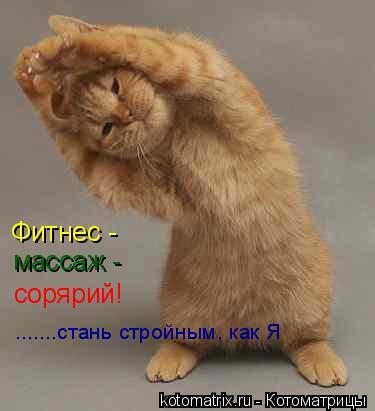Котоматрица: Фитнес -  массаж - сорярий! .......стань стройным, как Я