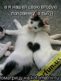 Котоматрица: а я нашел свою вторую  половинку, а ты?))