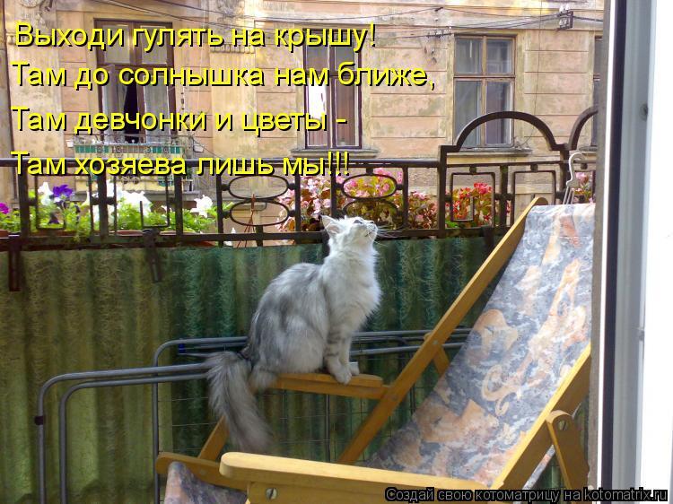 Котоматрица: Выходи гулять на крышу! Там до солнышка нам ближе, Там девчонки и цветы - Там хозяева лишь мы!!!