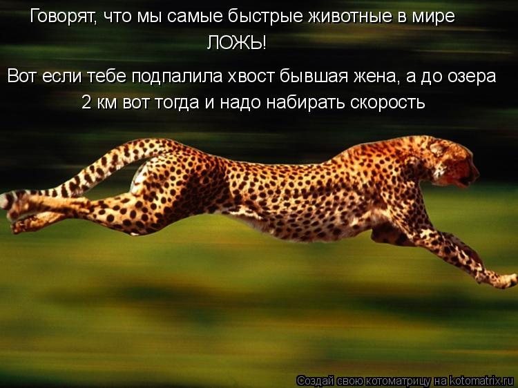 Котоматрица: Говорят, что мы самые быстрые животные в мире ЛОЖЬ! Вот если тебе подпалила хвост бывшая жена, а до озера 2 км вот тогда и надо набирать скоро