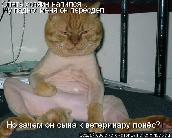 Котоматрица: Опять хозяин напился... Ну ладно: меня он переодел... Но зачем он сына к ветеринару понёс?!