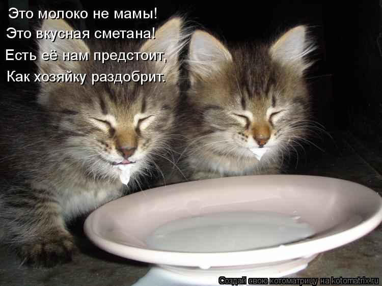 Котоматрица: Это молоко не мамы! Это вкусная сметана! Есть её нам предстоит, Как хозяйку раздобрит.