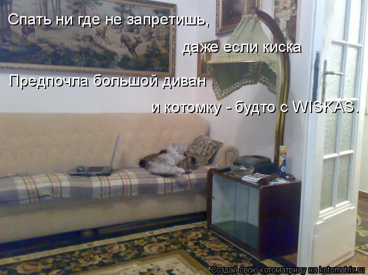 Котоматрица: Спать ни где не запретишь, даже если киска Предпочла большой диван  и котомку - будто с WISKAS.