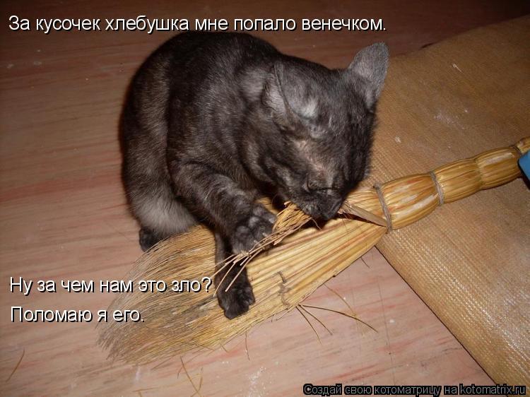 Котоматрица: За кусочек хлебушка мне попало венечком. Ну за чем нам это зло? Поломаю я его.