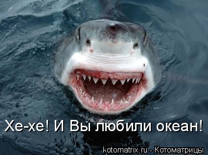 Котоматрица: Хе-хе! И Вы любили океан!