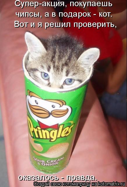 Котоматрица: Супер-акция, покупаешь  чипсы, а в подарок - кот.  Вот и я решил проверить, оказалось - правда.