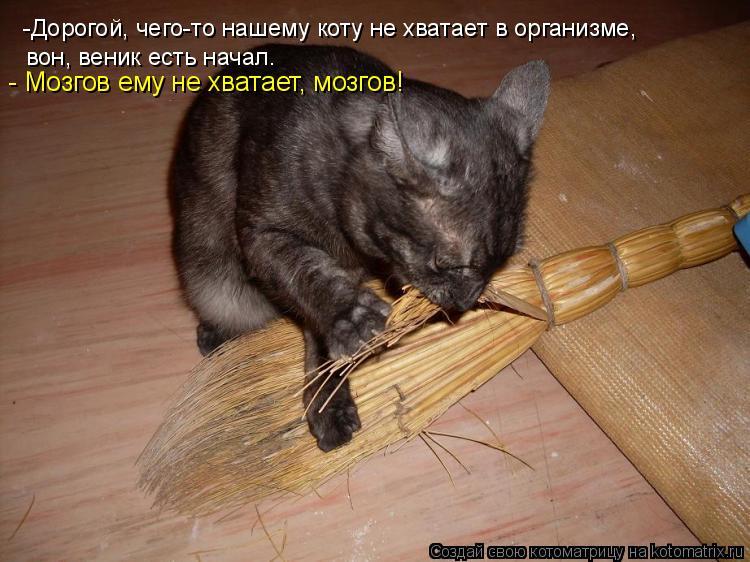 Котоматрица: -Дорогой, чего-то нашему коту не хватает в организме,  вон, веник есть начал. - Мозгов ему не хватает, мозгов!