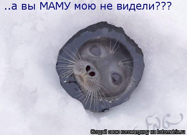 Котоматрица: ..а вы МАМУ мою не видели???