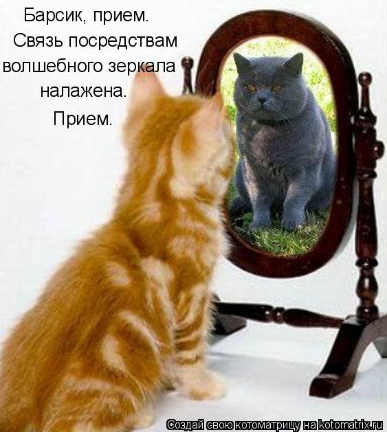 Котоматрица: Барсик, прием.  Связь посредствам  волшебного зеркала налажена. Прием.