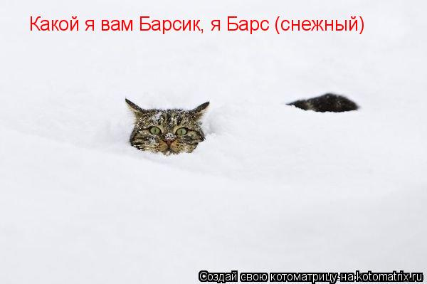 Котоматрица: Какой я вам Барсик, я Барс (снежный)