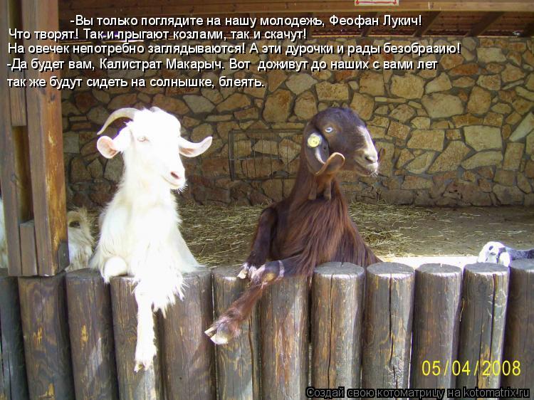Котоматрица: -Вы только поглядите на нашу молодежь, Феофан Лукич! Что творят! Так и прыгают козлами, так и скачут!  На овечек непотребно заглядываются! А э