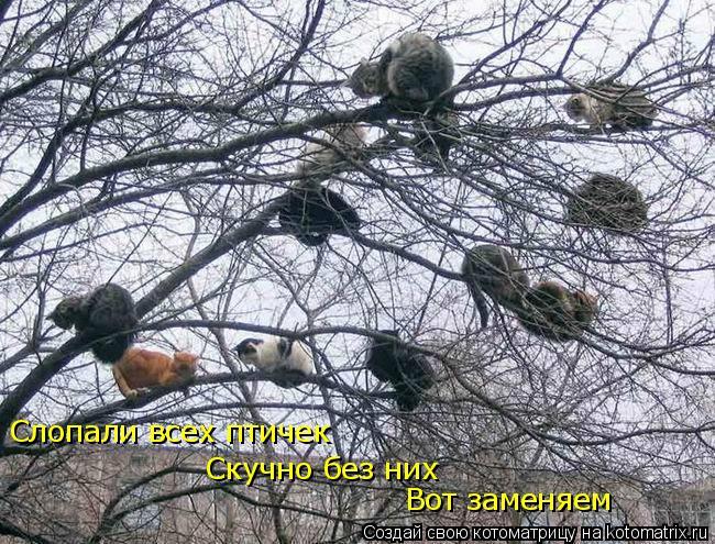 Котоматрица: Слопали всех птичек Скучно без них Вот заменяем