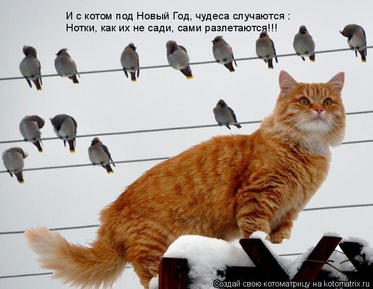Котоматрица: И с котом под Новый Год, чудеса случаются : Нотки, как их не сади, сами разлетаются!!!