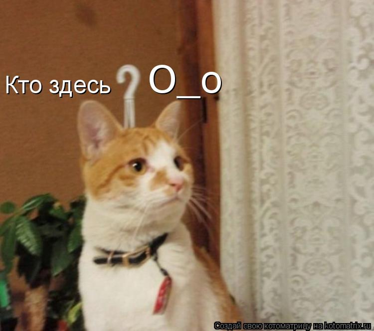 Котоматрица: Кто здесь О_о